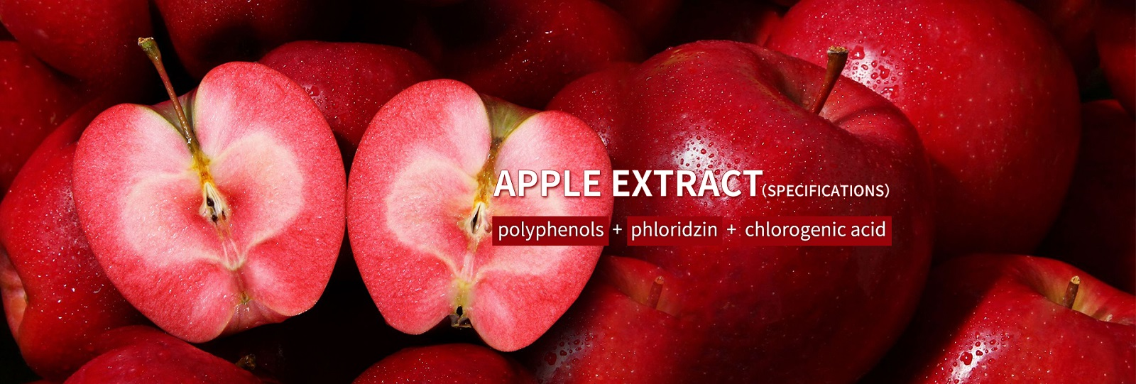 apple extact polyphenols red love extract phloridzin chlorogenic acid